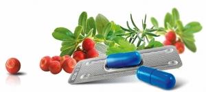Provillus Ingredients